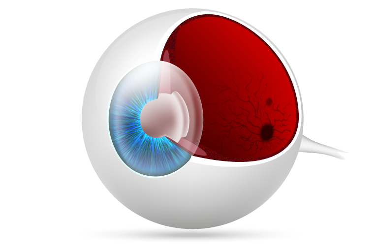 5-camadas-da-cornea